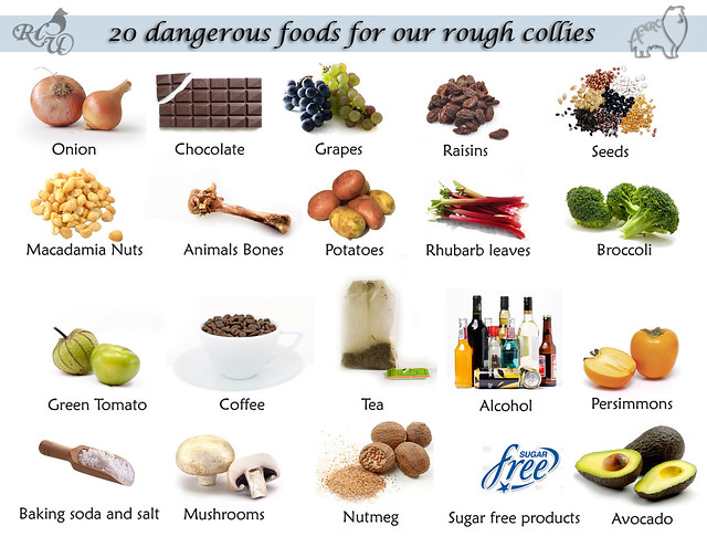 Foods Toxic To Dogs Uk