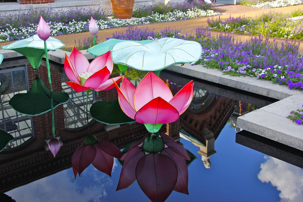 Missouri botanical garden s lantern festival lotus flow Missouri botanical garden lantern festival