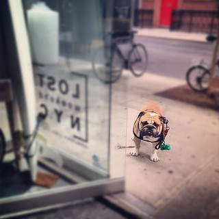 They call him Hooch. #lostweekendnyc | by adamCL