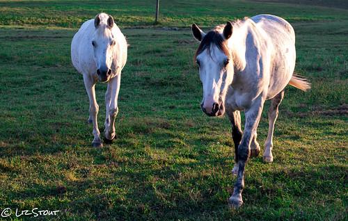 horses09222016 (8 of 11)