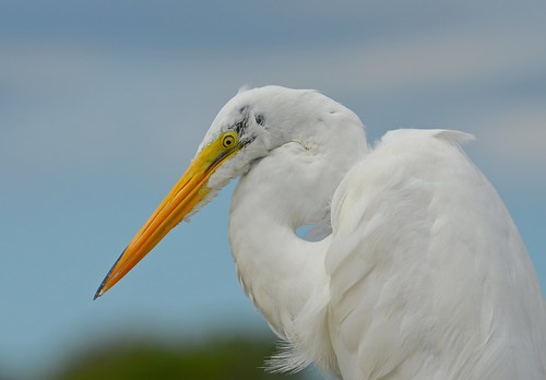 Egret | by KoolPix