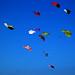 kites rokkaku battles blue red