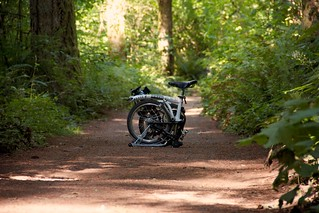 Brompton in the Woods | by W.D. Vanlue