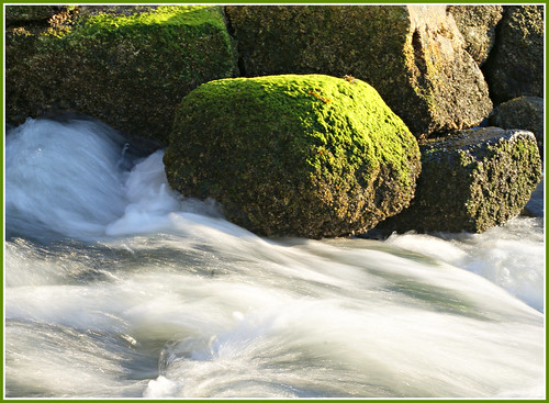 MOSS ON THE ROCKS | by PALEIDIA-Very Busy