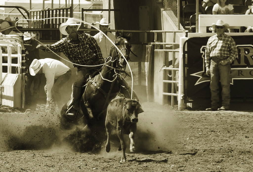 Calf Roping 01 Hermiston Or Farm City Pro Rodeo
