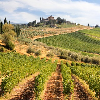 Chianti vineyards and olive gardens in Tuscany | by B℮n