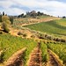 Chianti vineyards and olive gardens in Tuscany