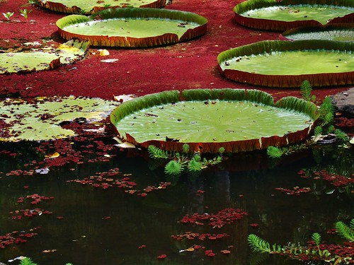 green pads over red water | by John.Johnson.15