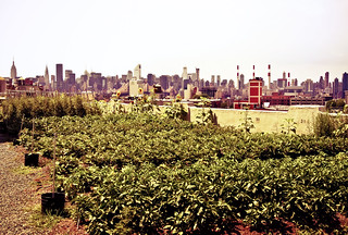 The Urban Rooftop Farm at Brooklyn Grange - New York City | by Vivienne Gucwa