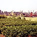 The Urban Rooftop Farm at Brooklyn Grange - New York City