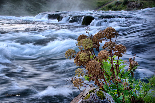 Beside the river | by Gunnarth Photograpy