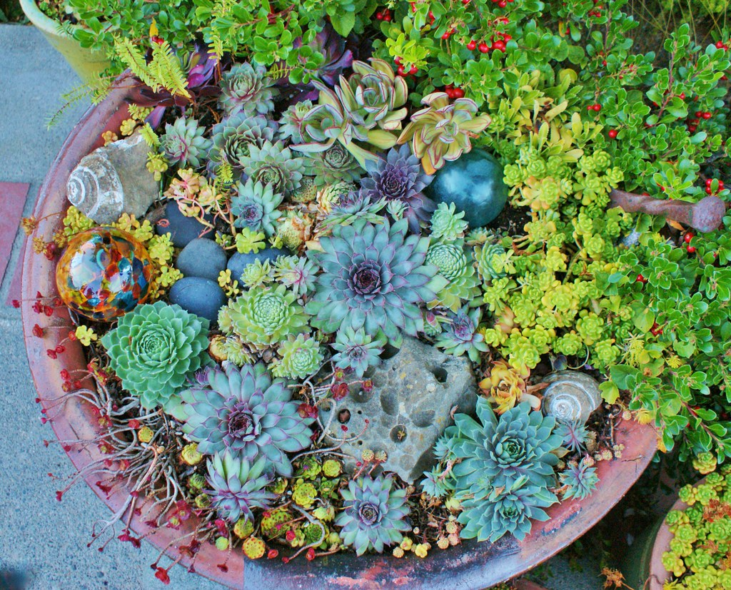 ... Sempervivum In A Mixed Planter With Glass Garden Art | By  KarlGercens.com GARDEN LECTURES