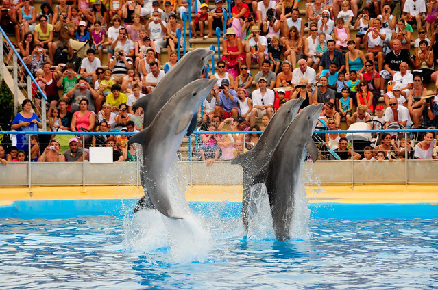 photo of dolphins at Marineland Antibes