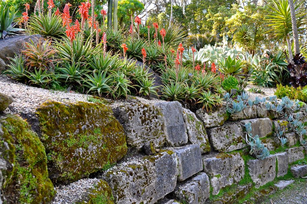 Golden Gate Park Botanical Gardens Succulent Garden Dana Smith Flickr
