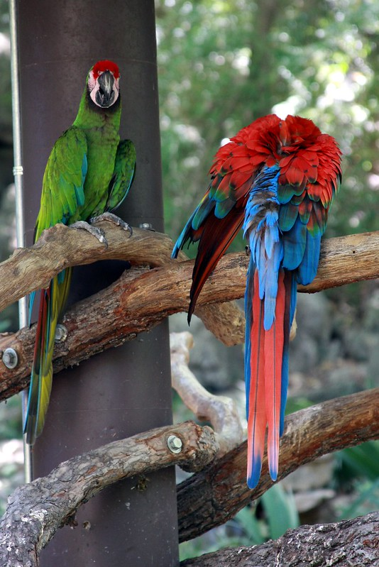 Fucking Parrots, Man.