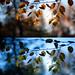 moods of autumn