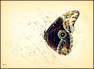 The Butterfly | by MEaves