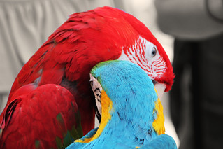 lovely parrots | by thanks for 1.000.000+ views