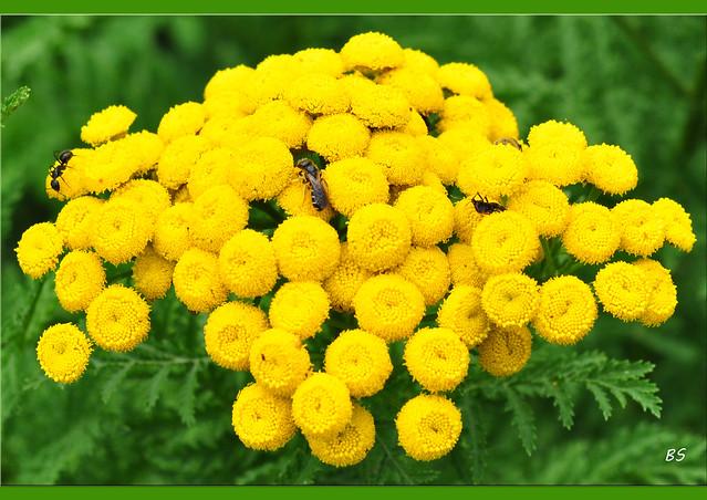 Naturfotografie - Nahaufnahmen - Makroaufnahmen - Wildblumen mit Insektenbesuch - Fotos: Brigitte Stolle