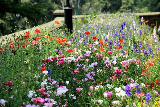 Row Flower Garden : Row of flowers in a garden flickr photo sharing