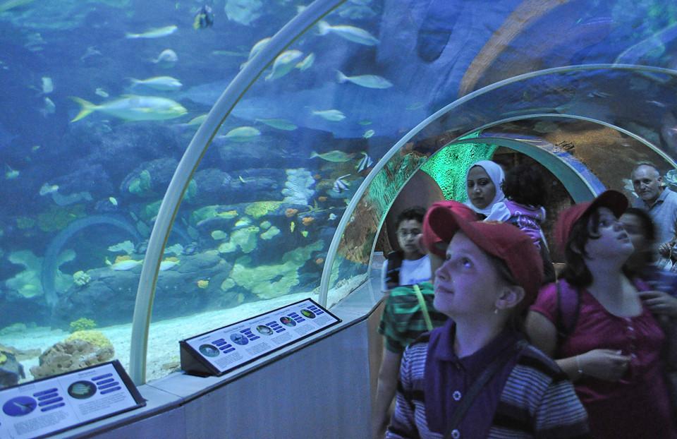 Birminghams Sea Life Centre Olchick Marks-Goloenko Flickr