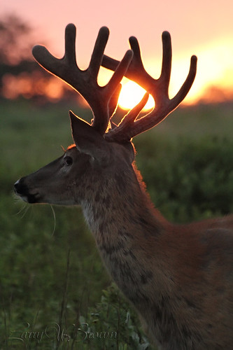 Backlit Rack | by Larry W Brown