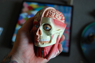 Anatomical study head | by MountainDewie