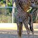 2012 ~ San Diego Zoo ~ San Diego
