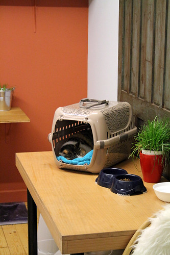 dreamCATchers cat café