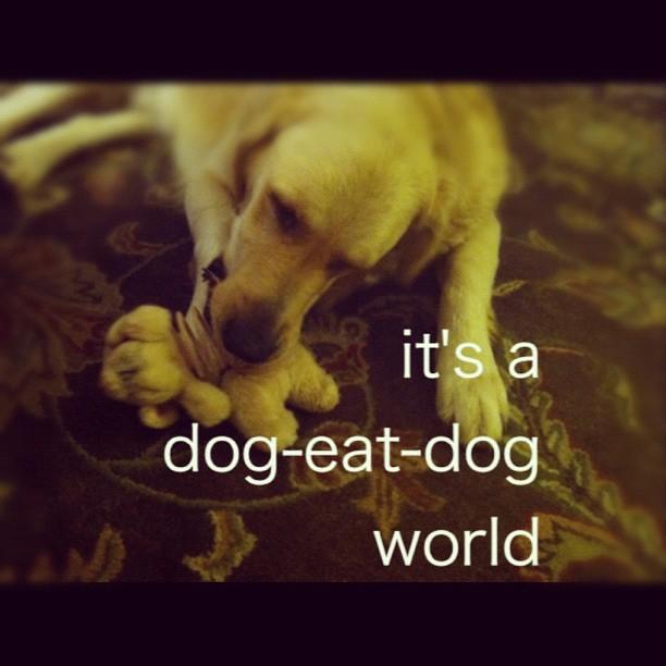 Cheryl S Dog Grooming