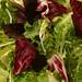 mediterranean salmon salad 2