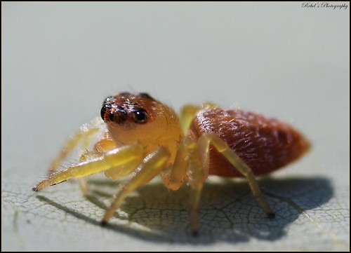 Spider | by Fiona Rebel's Photography