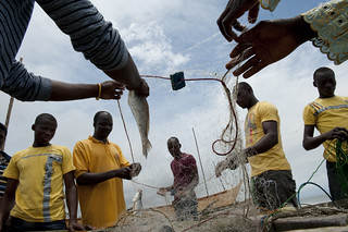 Removing freshly caught fish from nets | by World Bank Photo Collection