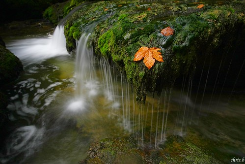 **dans le ruisseau de la source du l'ain** | by Chris **photographie**