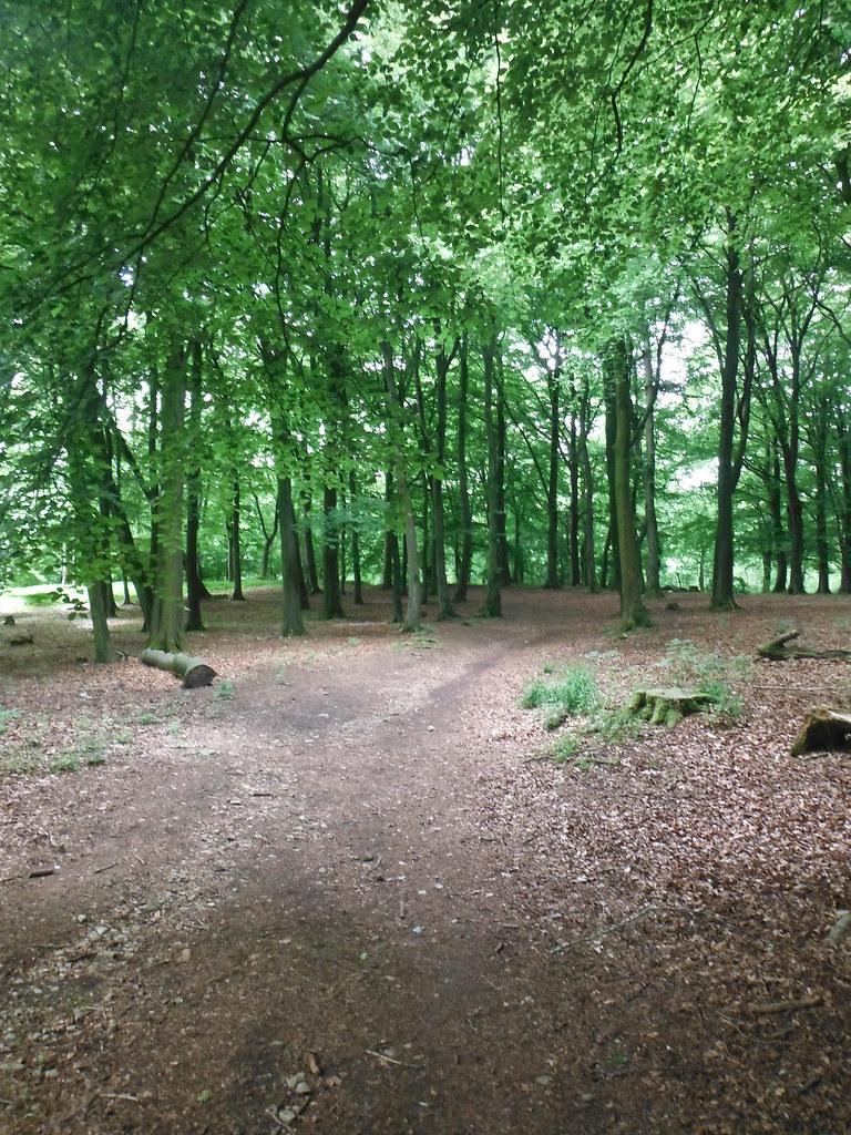 Grass Woods 1