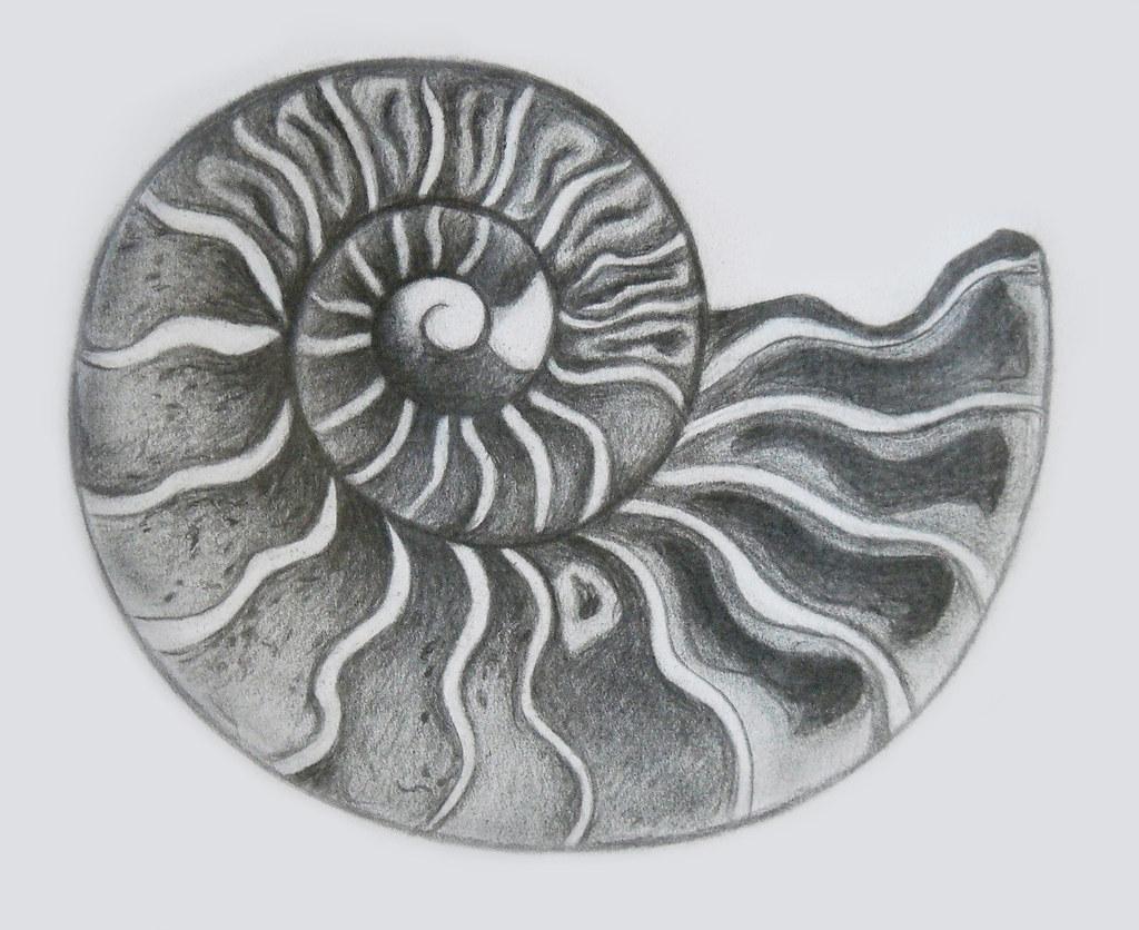 shell drawing 7/4/12 | Tina Banda | Flickr