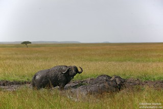 Views of the Masai Mara | by http://andrewskelton.net