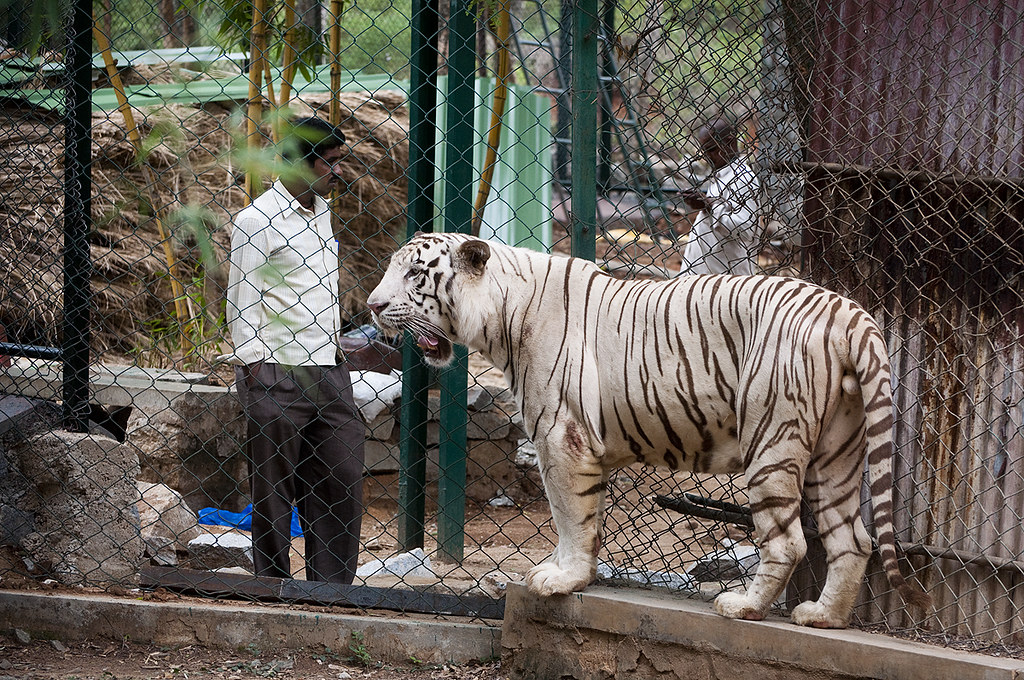 Bannerghatta national park in bangalore dating 7