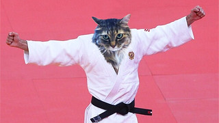 Cat Olympics - Judo | by nlongtin
