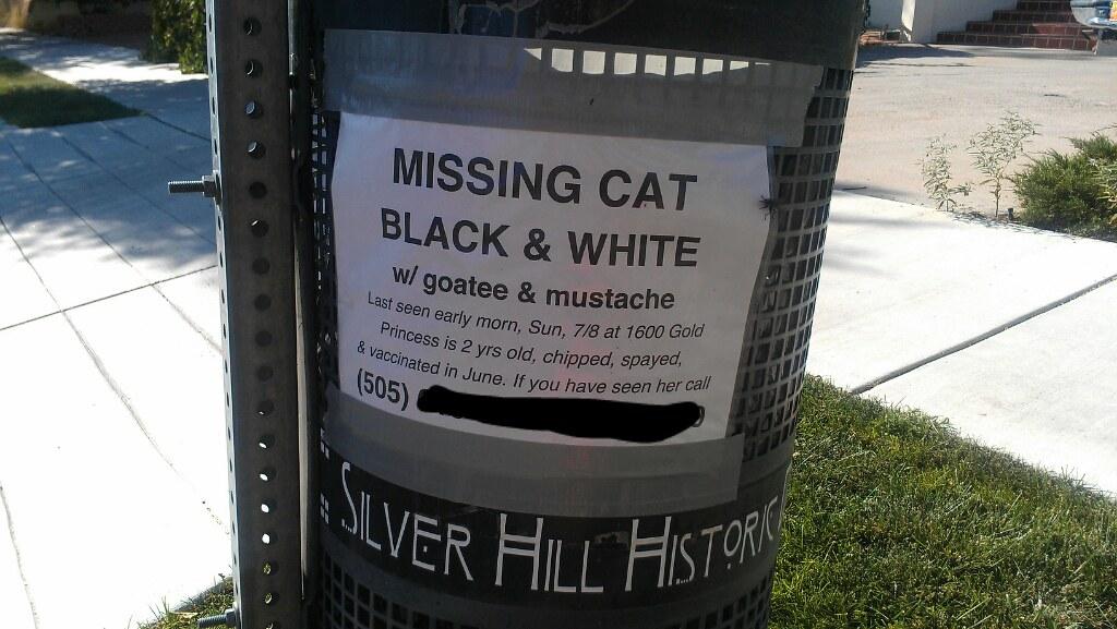 Black Cat Missing Ballarat