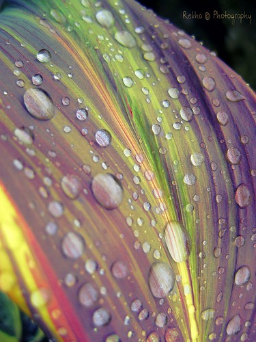 Colourful marble-like raindrop........... | by rekh@ c@n@r@