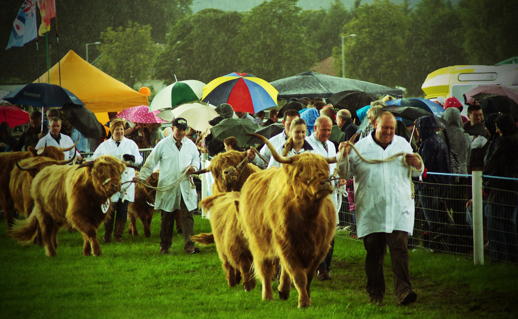 Image result for agricultural shows scotland