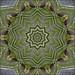 Bird's kaleidoscope