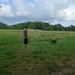 Sheepfold field