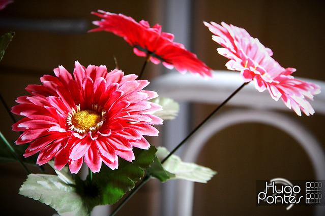 As flores de pl stico n o morrem flickr - Flores de plastico ...