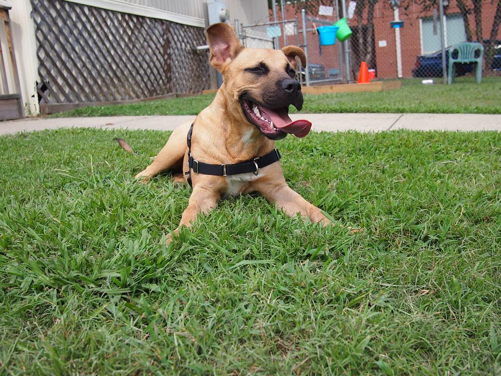 Image Result For Dog Training Treats