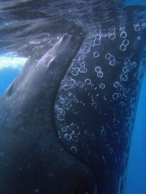 Best Dolphin Tours Oahu