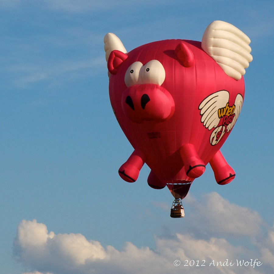 When pigs fly | Ohio Balloon Festival - Marysville ...