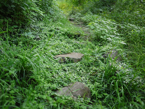 overgrown stone path | by Keithius