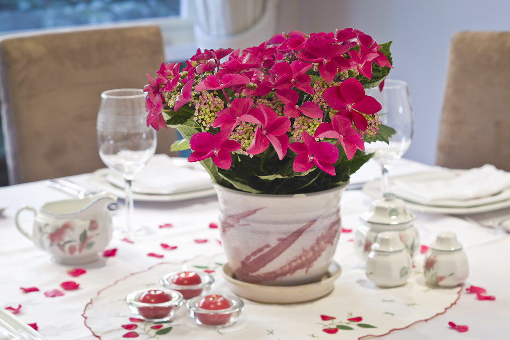 Strawberries And Cream Hydrangea Strawberries Amp Cream Gift Hydrangea Centerpiece